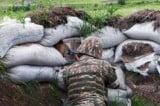 Շտապ. Հակառակորդը  դիվերսիոն փորձ է իրականացրել. հայկական կողմից զինծառայողներ են զոհվել